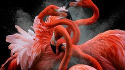 Những bức ảnh về loài chim đẹp nhất năm 2018