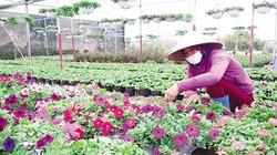 HTX Xuân Quan góp phần xây dựng nông thôn mới