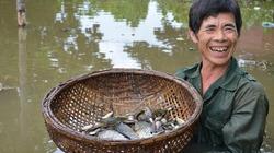 Chuyện khó tin ở nơi vẫn có chim chóc sinh sôi, tôm cá ếch nhái đầy đồng