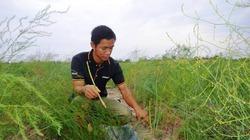 Tiến sĩ về quê làm giàu bằng nghề tay trái - trồng rau trên cát