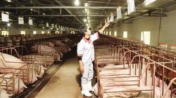 Thăm trang trại lợn CNC trăm tỷ đồng ở Thủ đô