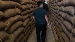 Thị trường điều Việt Nam được gì khi T&T Group nhập hàng trăm ngàn tấn điều thô?