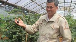 Trồng phúc bồn tử đen hái trái suốt 10 năm, bán giá 200.000 đồng/kg