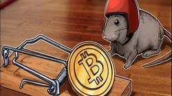 Giá Bitcoin bất ngờ tăng mạnh trở lại, thoát đáy 5 tháng