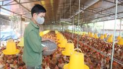 Gà nhập khẩu tăng đột biến có là nguyên nhân làm giảm giá gà trong nước?