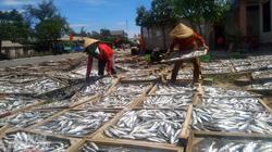 Lao đao làng nghề hấp cá xuất khẩu