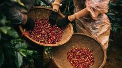 Thị trường giá cả: Cà phê tăng mạnh, tiêu đi ngang