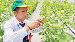 """Cùng nông dân khám phá """"đại bản doanh"""" trồng rau công nghệ cao"""