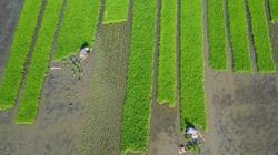 Nguy cơ với an ninh lương thực Châu Á: cần thêm 800 tỷ USD để đổi mới sản xuất