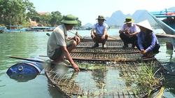 Đặc sản cá trắm nuôi lồng ở Phong Nha