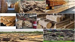 """Xuất khẩu gỗ vượt kỷ lục vẫn """"khát"""" nhân lực chất lượng cao"""
