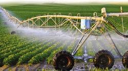 Khởi nghiệp nông nghiệp: Nhìn từ Israel