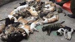 Kỳ lạ mèo ở một xã đồng loạt lăn ra chết bất thường