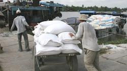 """Giá gạo xuất khẩu giảm mạnh: Chậm thay đổi sản xuất sẽ """"chết"""" nhanh"""