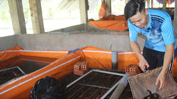 """Bí quyết nuôi lươn sạch không bùn trong chuồng heo của chàng """"9X"""""""