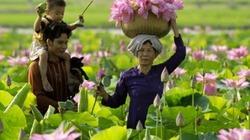 """Đổi mới theo mô hình """"lúa – sen – lúa"""": Hướng đi mới cho nông dân Đồng Tháp"""