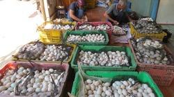 Sau thời gian giảm sâu kỷ lục, trứng gia cầm tăng giá mạnh trở lại
