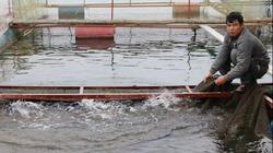 Giải pháp đầu ra cho cá lồng Quỳnh Nhai