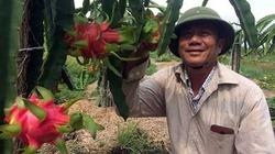 Chuyển đổi cơ cấu cây trồng thu lãi gần 100 triệu đồng