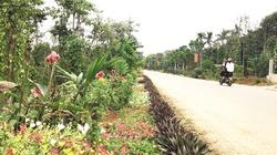 Cam Lộ xây dựng nông thôn mới gắn với chuyển đổi cơ cấu cây trồng