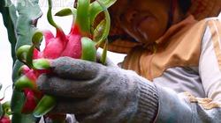 Nghịch lý giá trái cây ngược chiều ở 2 miền Đông và Tây Nam Bộ