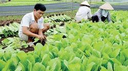 Hợp tác xã nông nghiệp kiểu mới: Hướng đi bền vững mới cho nông dân