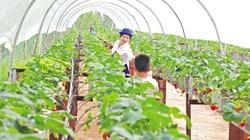 Quảng Sơn đẩy lùi đói nghèo nhờ liên kết sản xuất