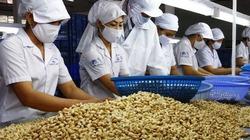 Trung Quốc tăng mua hạt điều, mở nhà máy dọc biên giới VN