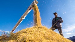G20 ưu tiên áp dụng AI và robot trong ngành sản xuất nông nghiệp