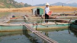 Nông dân xã nghèo Chiềng Lao giúp nhau phát triển kinh tế