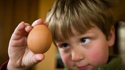 Trứng gia cầm: Trẻ nhỏ ăn bao nhiêu là đủ?