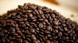 Lao đao như thị trường cà phê!