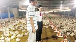 """Nhà nông xứ Quảng thành """"tỷ phú"""" nhờ Agribank"""