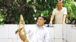 Quỹ HTND giúp nhà nông xứ Quảng làm giàu