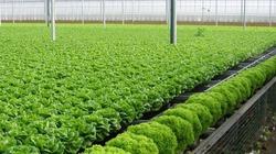 Thanh Hóa cho phép chuyển đổi 5,46 ha đất rừng làm trang trại
