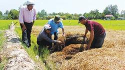 Đất chín rồng trồng nấm theo hướng công nghệ cao