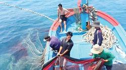 Dùng kỹ thuật mới, bội thu hải sản