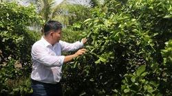 Lão nông miền Tây trồng loại cây mỗi năm thu trăm tỷ