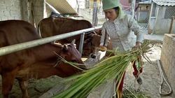 Mộc Châu hỗ trợ vốn vay cho nông dân phát triển sản xuất