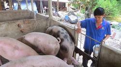 Giá lợn hơi 4/7: Miền Nam giảm; Miền Bắc, Trung ổn định