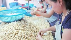Hạt điều Việt hụt hơi ở thị trường Mỹ