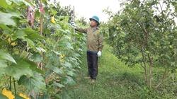Đồng hành cùng nông dân xã Phú Lai giảm nghèo
