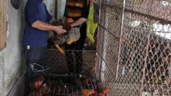 Bắc Giang: Giá gà tăng cao, đã bán hết hơn 1 triệu con gà đồi