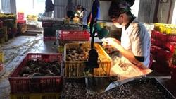 Kiếm tiền tỷ mỗi năm nhờ nghề soi hậu môn chọn gà trống, gà mái