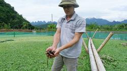 """Nuôi """"thập cẩm"""" các thứ con đặc sản, anh nông dân tỉnh Hà Giang bán con nào cũng đắt tiền"""