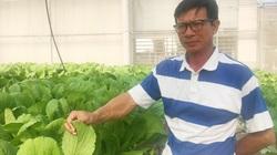 Quảng Bình: Từ Hàn Quốc về quê trồng rau không cần đất, ai cũng muốn mua, nông dân lãi hàng chục triệu mỗi tháng