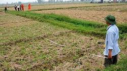 Ai được thuê đất nông nghiệp?