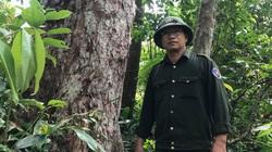 Bình Định: Hé lộ những câu chuyện bất ngờ của những người thầm lặng đi đếm cây quý trong rừng