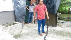 """Sóc Trăng: Từ dân """"a ma tơ"""" thành """"ông trùm"""" nuôi rắn hổ mang to bự tổ chảng, bán 750 ngàn/kg"""