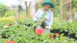 """Ông nông dân Sa Đéc thu bộn tiền nhờ đem nhiều giống cây, hoa lạ về trồng ở """"vương quốc hoa"""""""